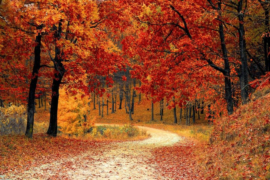 Fall activities in the Centre County area